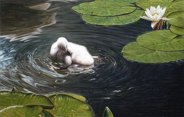 "Cygnets Morning Shower 27"" x 17.5"""