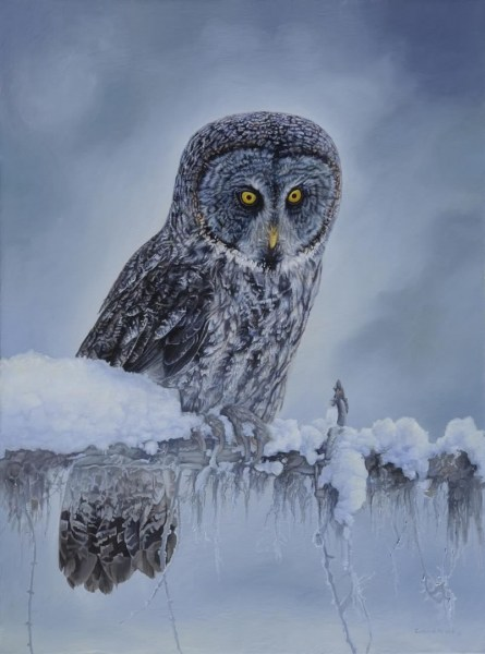 "Great Gray Owl 18"" x 24"""