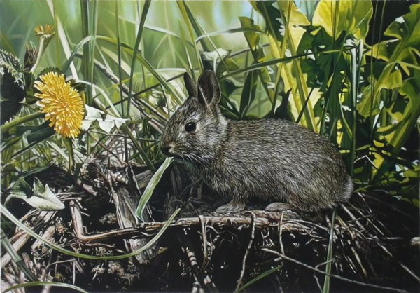 "Young Rabbit 20"" x 14"""